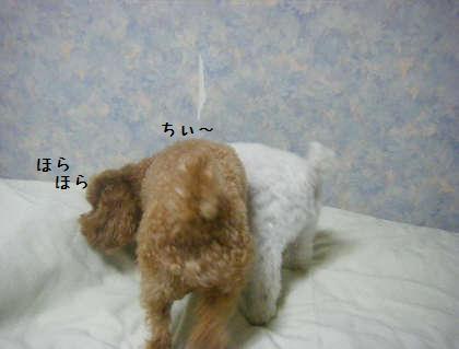 2008_09250245.jpg