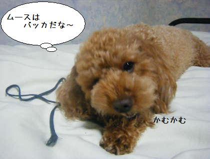 2008_09250266.jpg