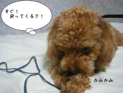2008_09250267.jpg