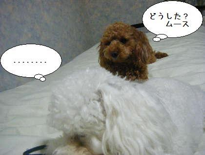 2008_09250274.jpg