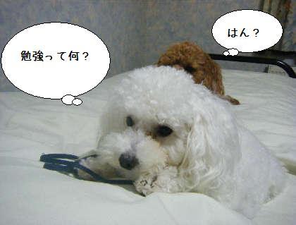 2008_09250277.jpg