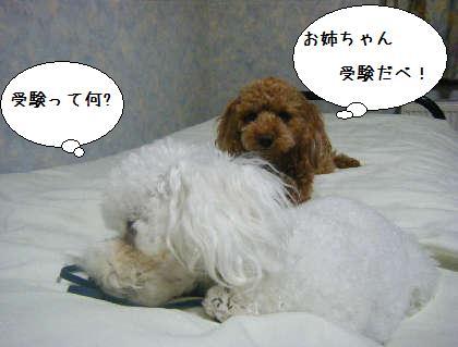 2008_09250278.jpg