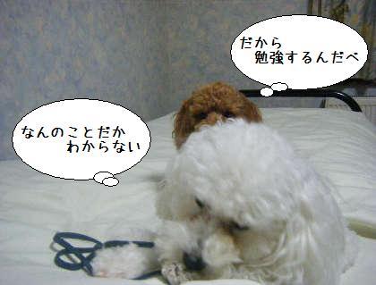 2008_09250280.jpg