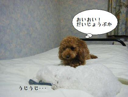 2008_09250286.jpg