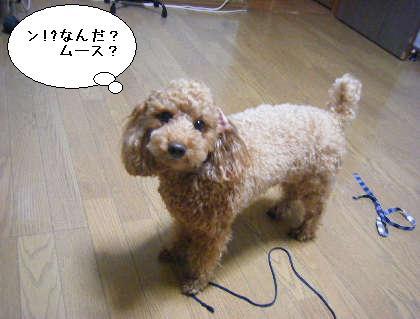 2008_09300006.jpg