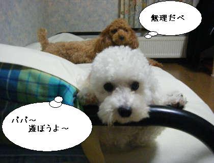 2008_09300010.jpg