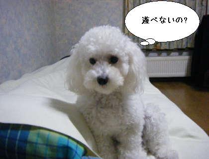 2008_09300011.jpg