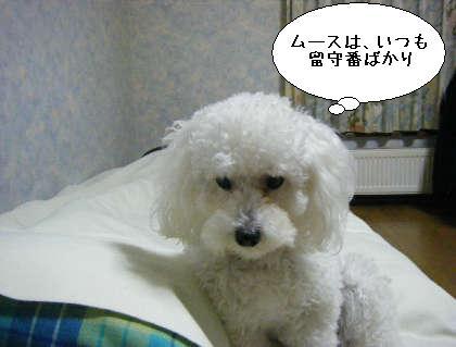 2008_09300012.jpg
