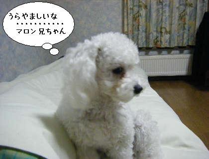 2008_09300014.jpg