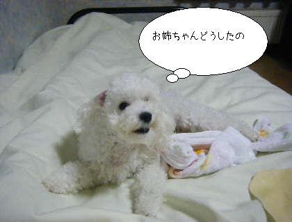 2008_09300036.jpg