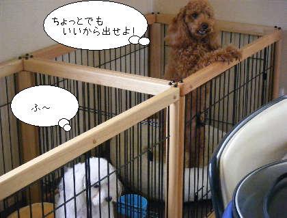 2008_09300109.jpg