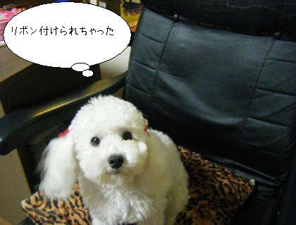 2008_09300143.jpg