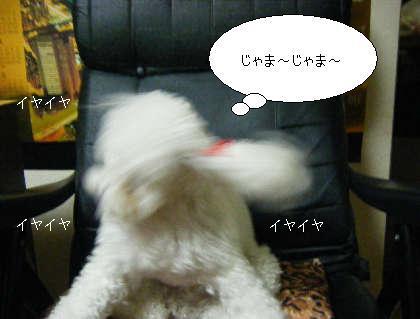 2008_09300145.jpg