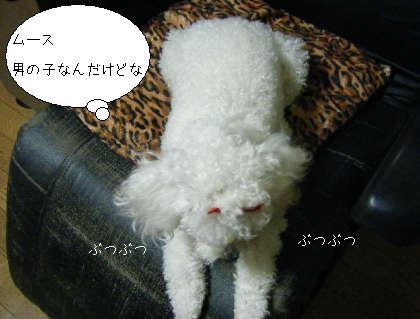 2008_09300158.jpg