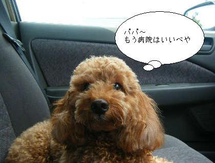 2008_09300194.jpg