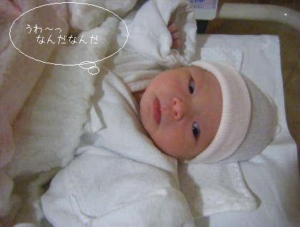 2008_10280019.jpg