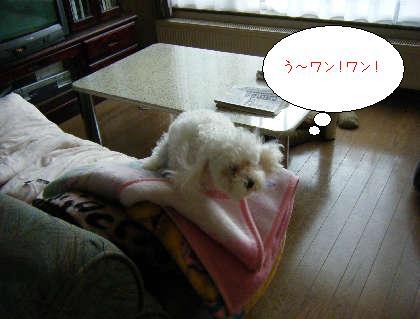 2008_11050032.jpg