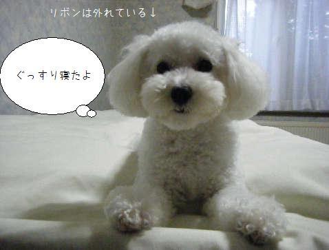 2008_11090004.jpg