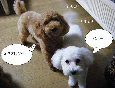 2008_11160066.jpg