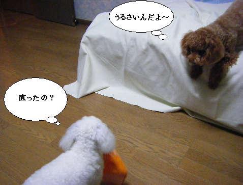 2008_11240021.jpg