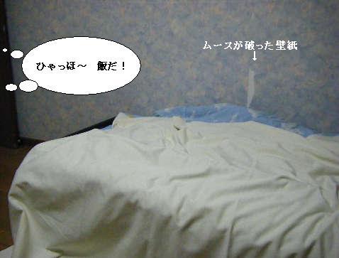 2008_11240030.jpg