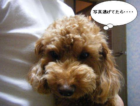 2008_11300097.jpg
