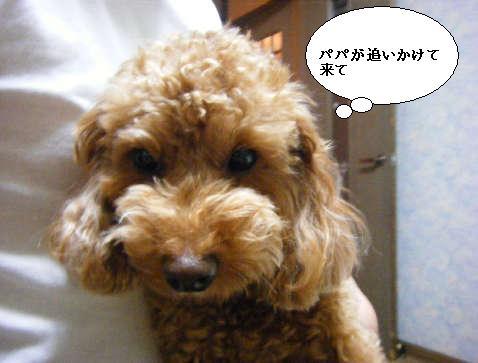 2008_11300098.jpg