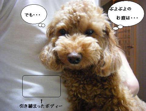 2008_11300103.jpg