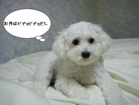 2008_12010053.jpg