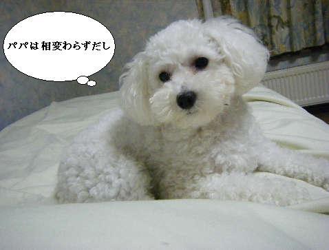 2008_12010059.jpg
