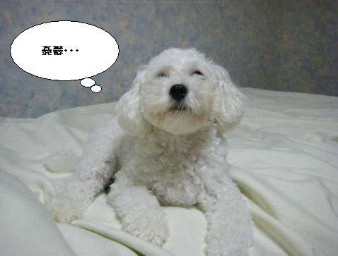 2008_12010068.jpg