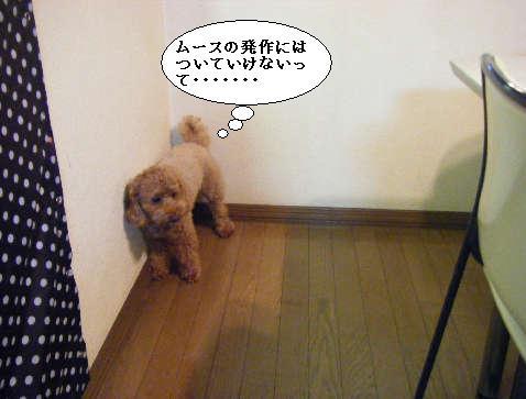 2008_12060012.jpg