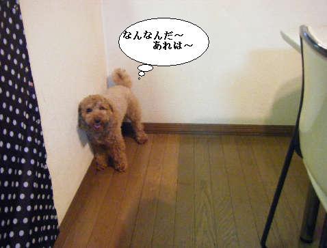 2008_12060013.jpg