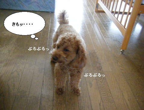 2008_12100067.jpg