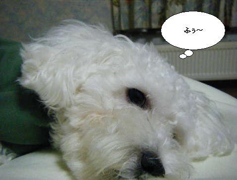 2008_12110041.jpg