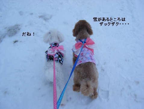 2009_01010118.jpg