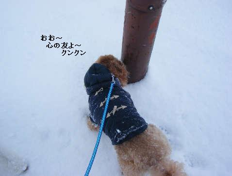 2009_01040010.jpg