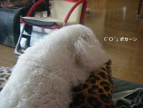 2009_01050032.jpg