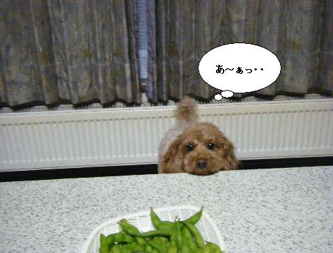 2009_01060031.jpg