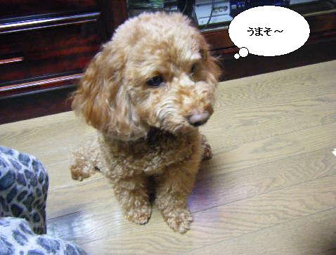 2009_01060050.jpg