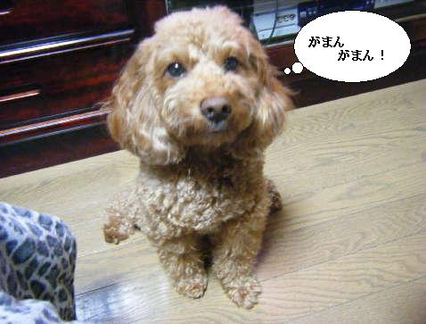 2009_01060051.jpg