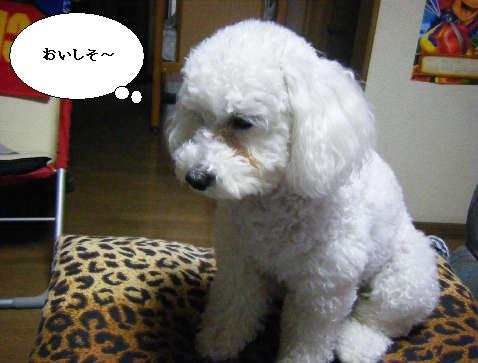 2009_01060055.jpg
