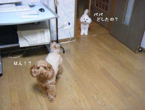 2009_02150001.jpg
