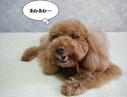 2009_03010085.jpg