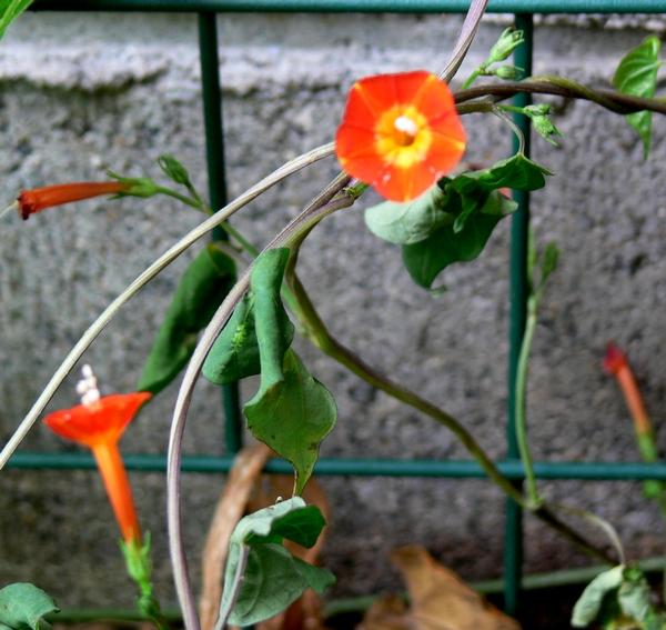 更地に咲いていた花