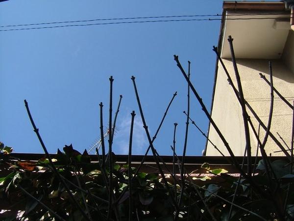 homupe201060.jpg