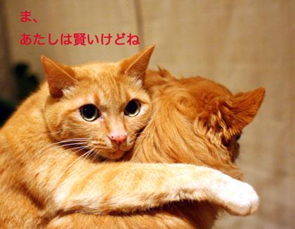 udekumi2.jpg
