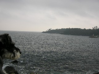 20081116m8.jpg