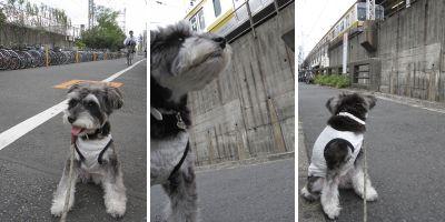 20091107m07.jpg