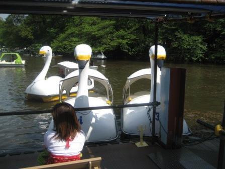 スワンボート@井の頭公園